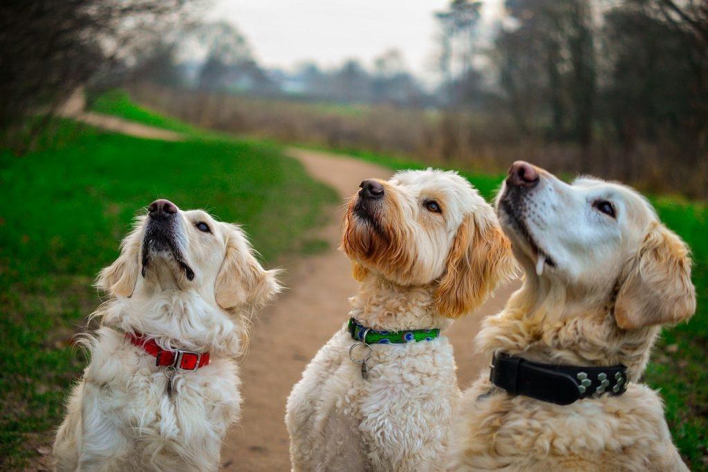 Topdog Training