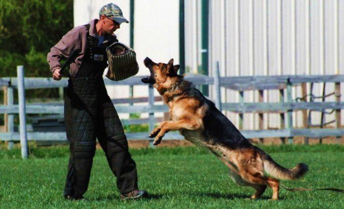 Topdog Training 5