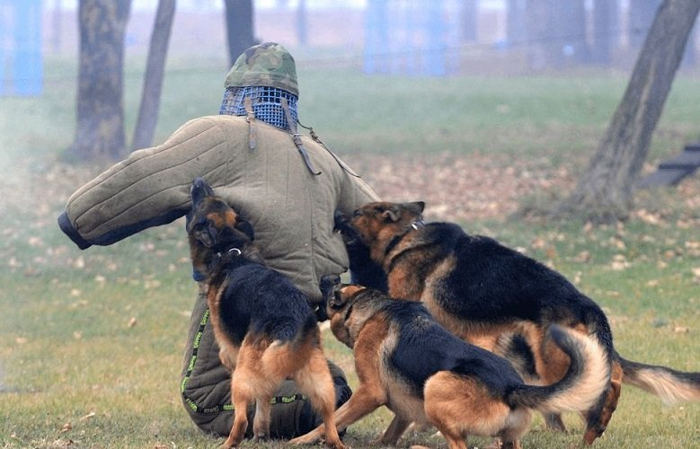Topdog Training 4