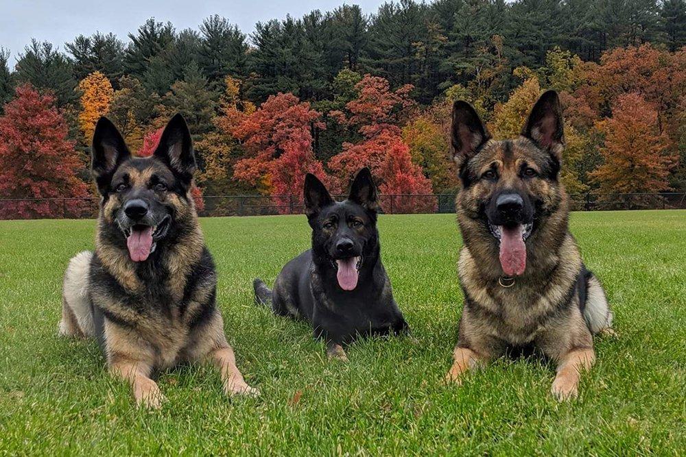 Topdog Training 6